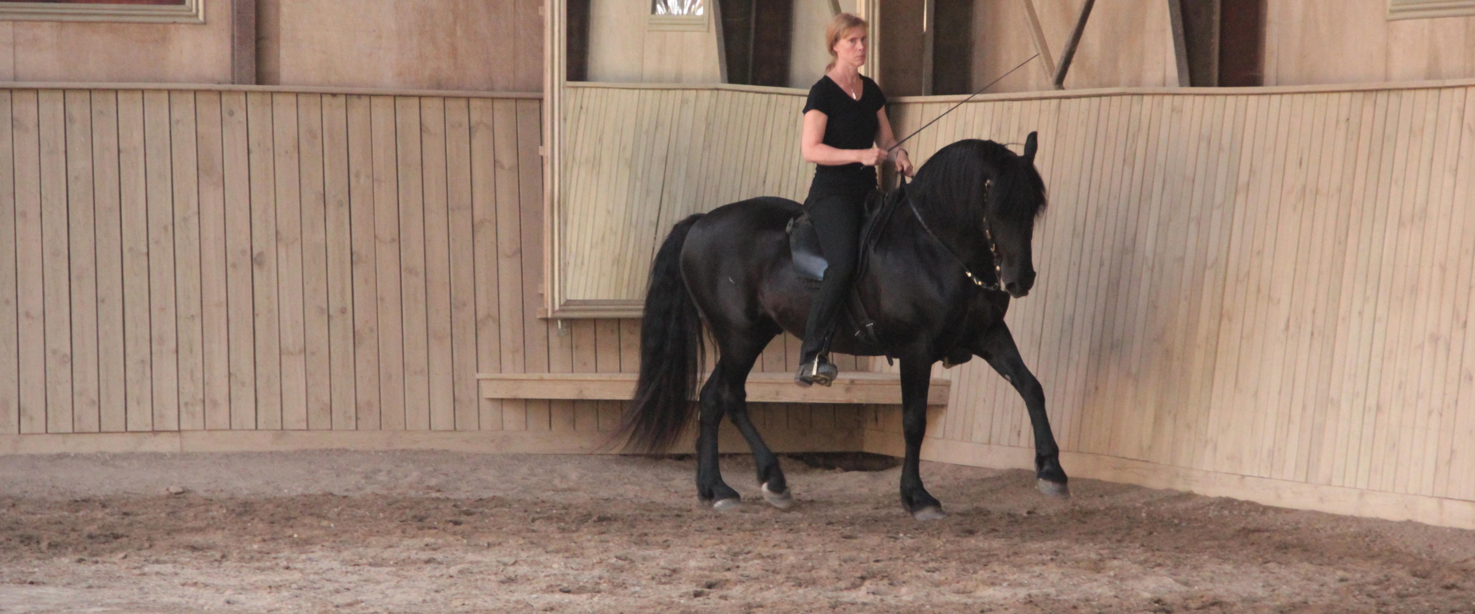 Utvecklas tillsammans med Din häst