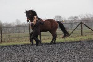Det samlade galopparbetet är det som har hjälpt den här hästen att lära sig att jobba korrekt genom sin kropp.