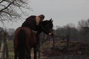 Bra jobbat! Annika får hästarna att känna sig duktiga och arbeta självständigt utan att använda för mycket hjälper eller för mycket press.