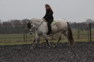 Fram och ned i trav, där bakbenen svingar in ordentligt inunder hästen.