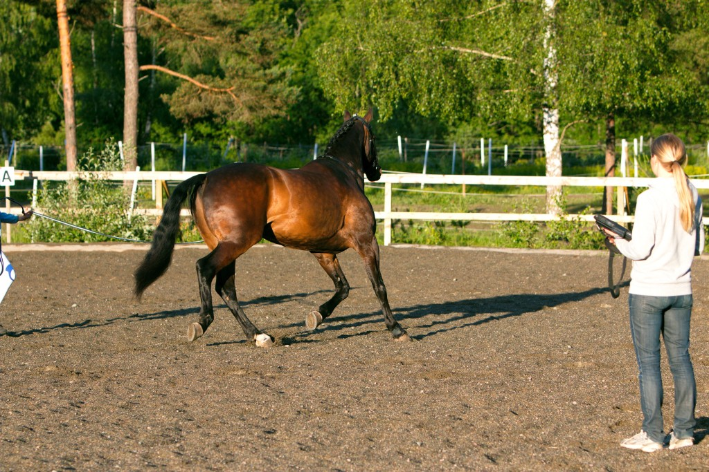 Hur asymmetriska är våra hästar egentligen?