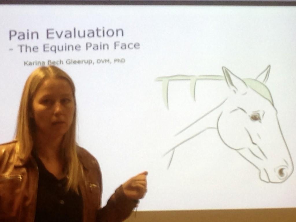 Kan du se på din häst om den har ont?